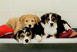 companian_animal_pups